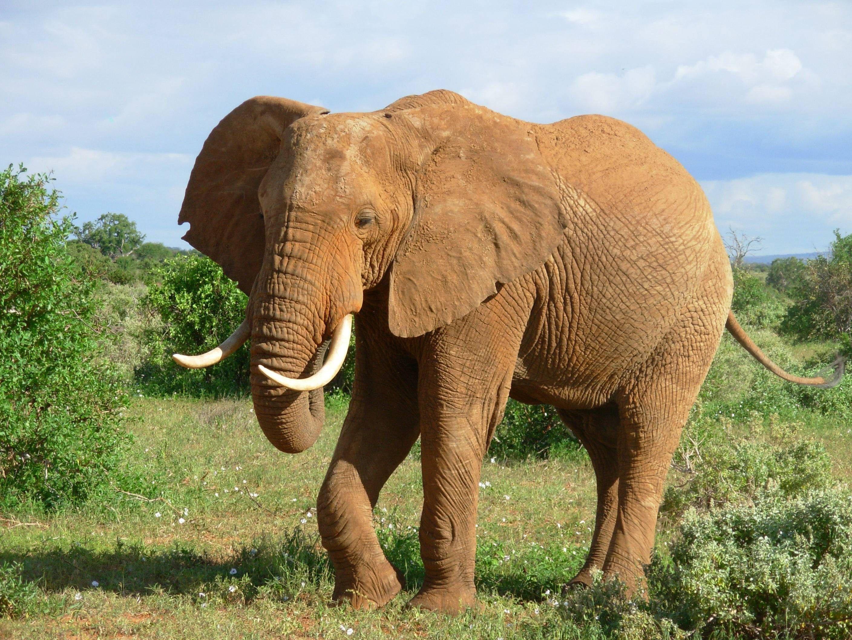 elephant : Full HD Pictures | likeagod | Pinterest
