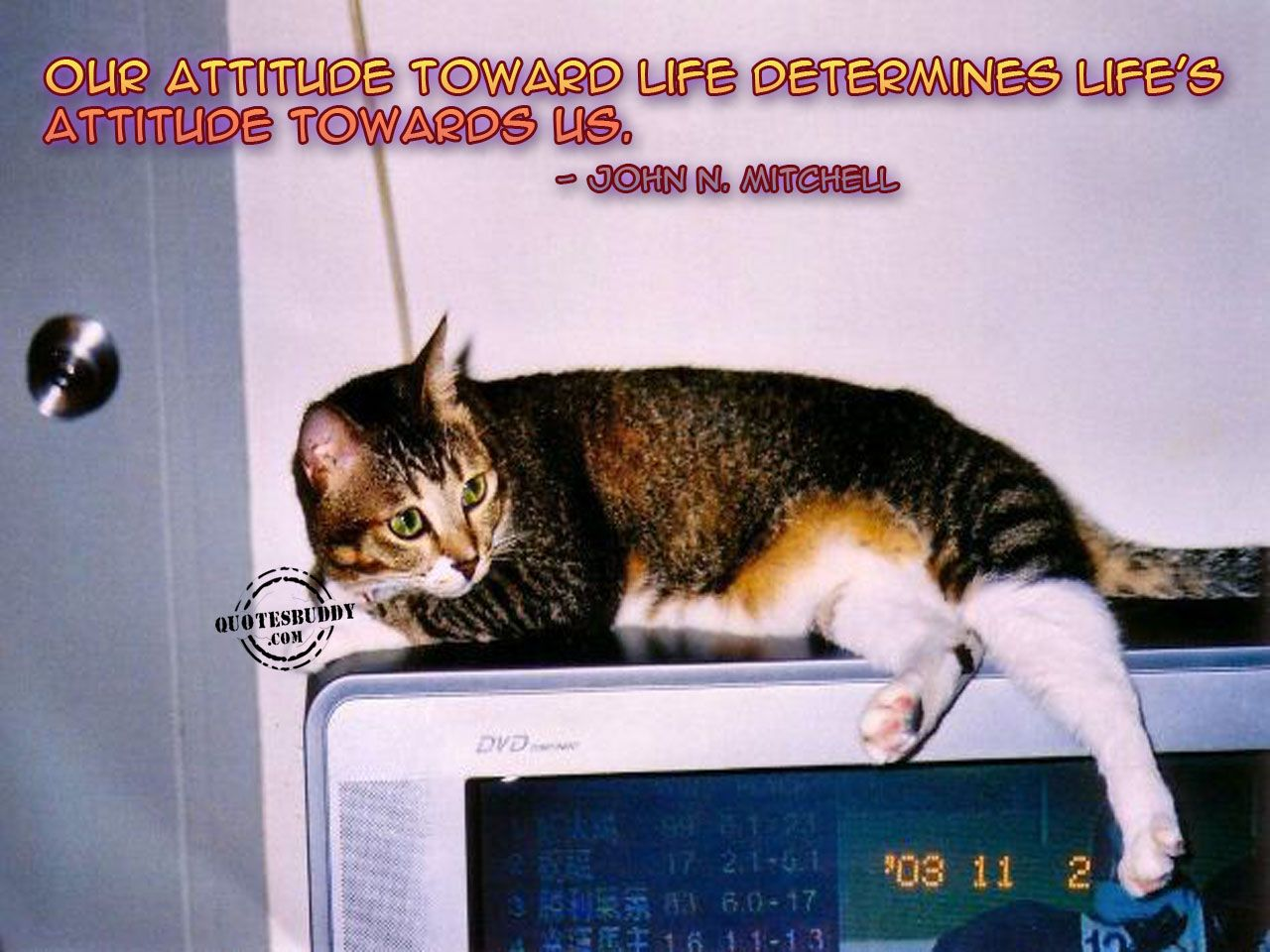 Inspiring Quote With Cat In Photo Inspirational Quotes Cats Short Positive Quotes