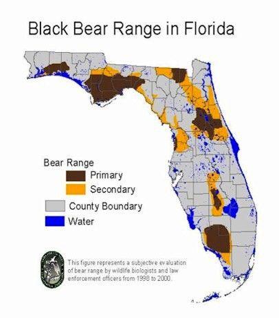Black Bear Range in Florida | MAPS | Florida, Old florida, Florida