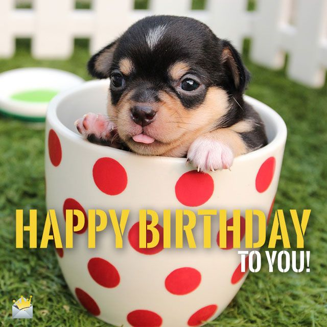Two Words From Cute Animals Happy Birthday Pets Cute Puppies