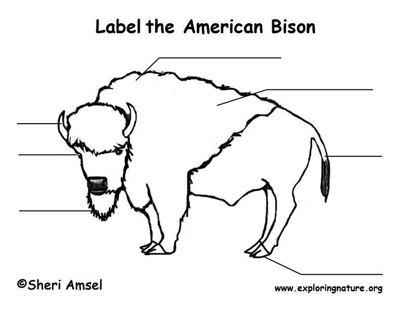 3574be528041eea803475c814a2455ba polar bear body diagram exploring nature educational resource