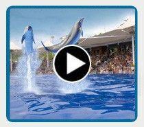 Dolphin show | Marineland Mallorca