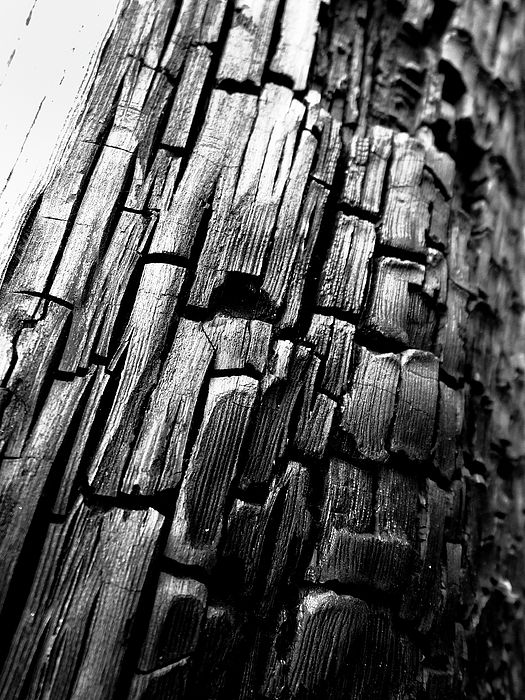 Black and white photography art for sale nature photography home decor wall art my photography for sale pinterest nature photography photography