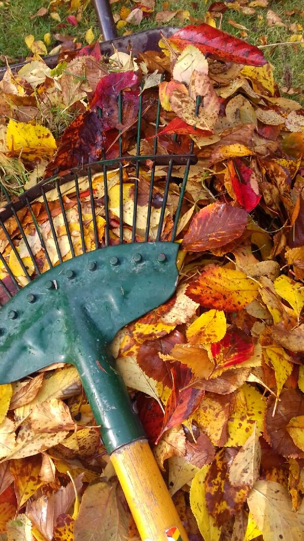 The Autumnal Workout #gardening #garden #DIY #home #flowers #roses #nature #landscaping #horticulture