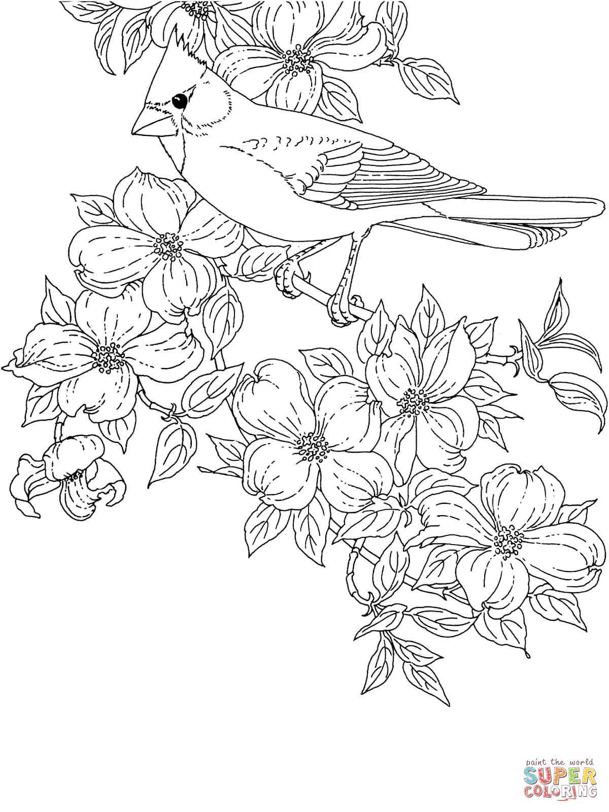 Cardinal bird and flowering virginia state flower super coloring