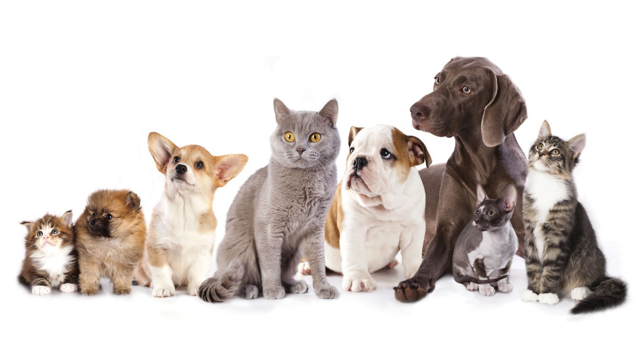 Dog Wallpaper Hd Backgrounds Images Dog Poster Pet Holiday Pet Market