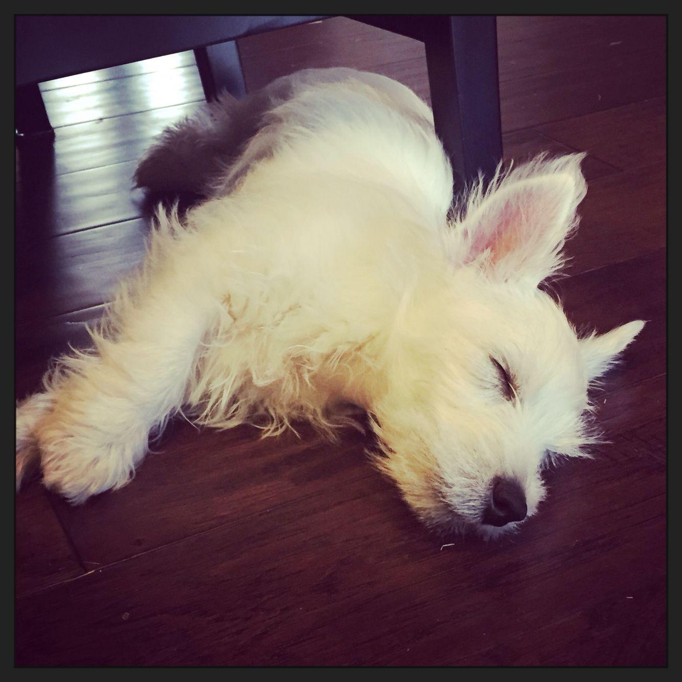 Sweet puppy dreams, little Max.