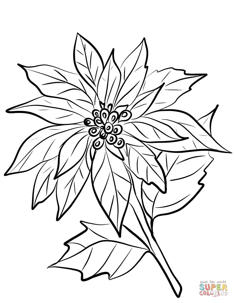 Poinsettia Flower Coloring Page Free Printable Coloring Pages Flower Coloring Pages Flower Line Drawings Christmas Coloring Sheets