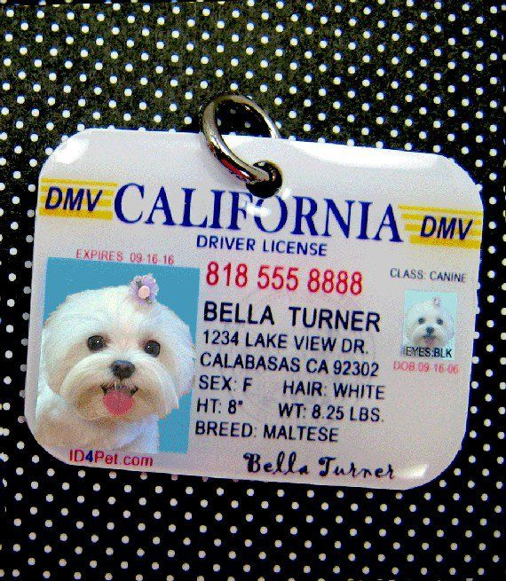 California Driver License Pet Photo Id Tag By Id4pet On Etsy Pet
