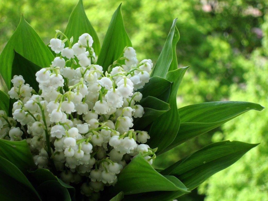 Háttérképek. Virágok .. Vita LiveInternet - orosz Service Online ... 24b7733a15