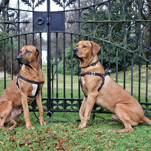 Boys look good guarding the gate...... definately no unwanted guests getting past these two....