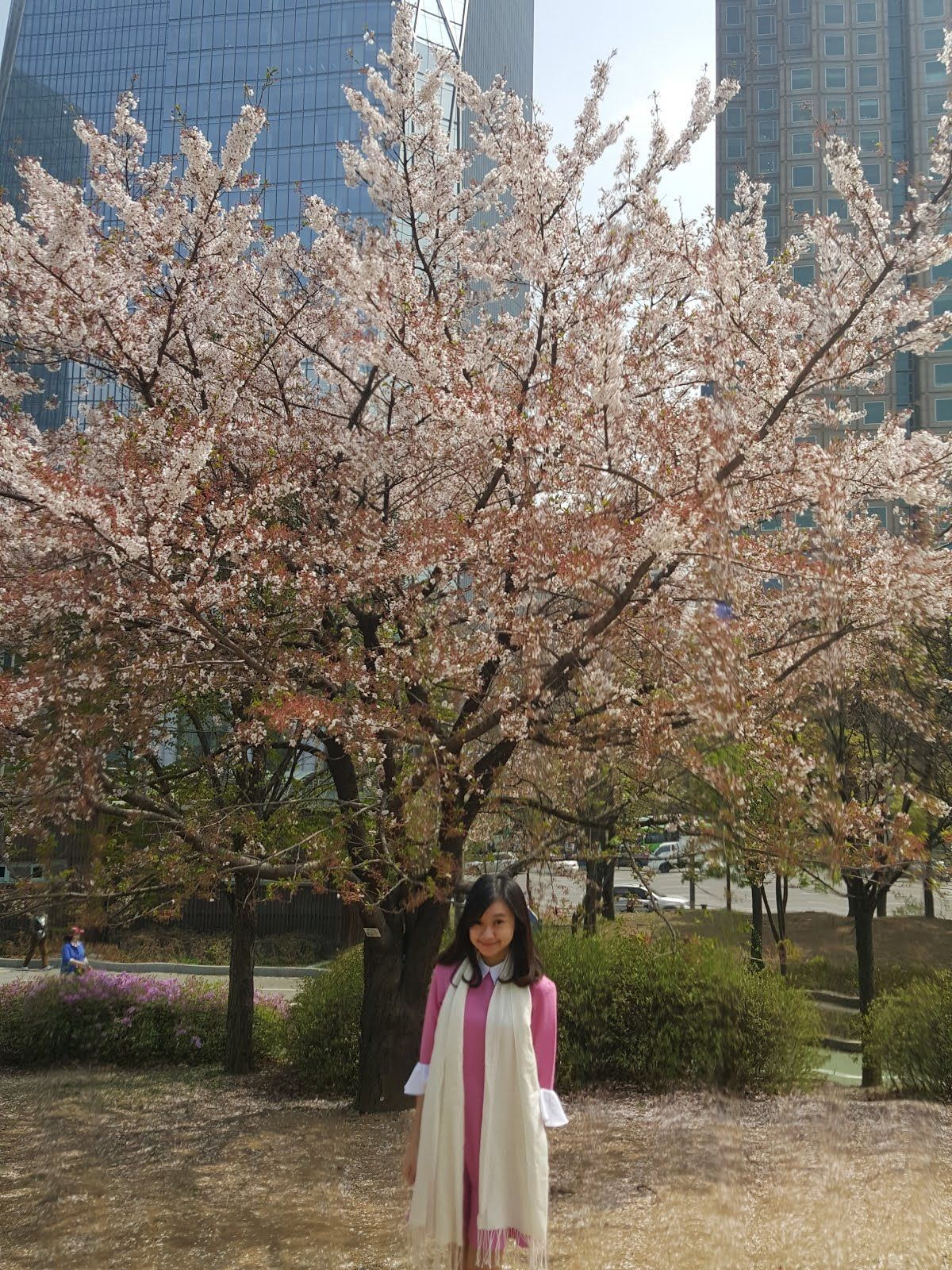April Has Always Been My Favorite Month To Travel Due To Spring Weather And Sakura Travel Around South Korea Can Be E South Korea Spring Weather Travel Around