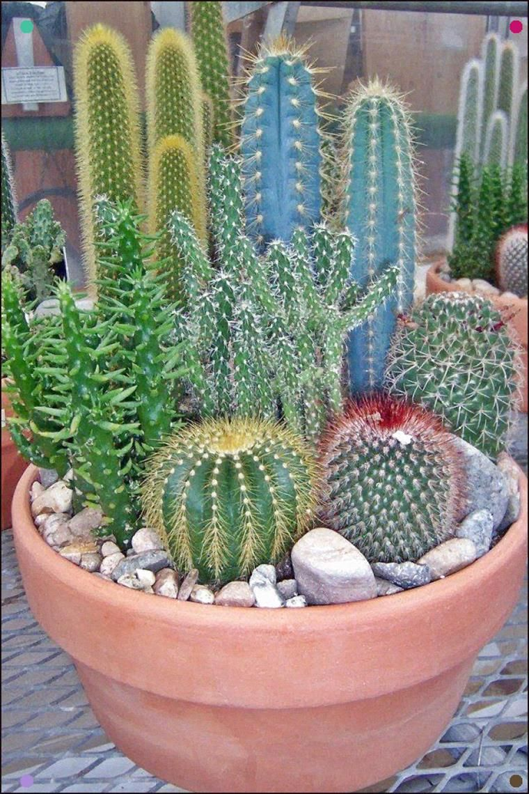 Imagen 10 | Mini cactus garden, Cactus garden, Cactus plants