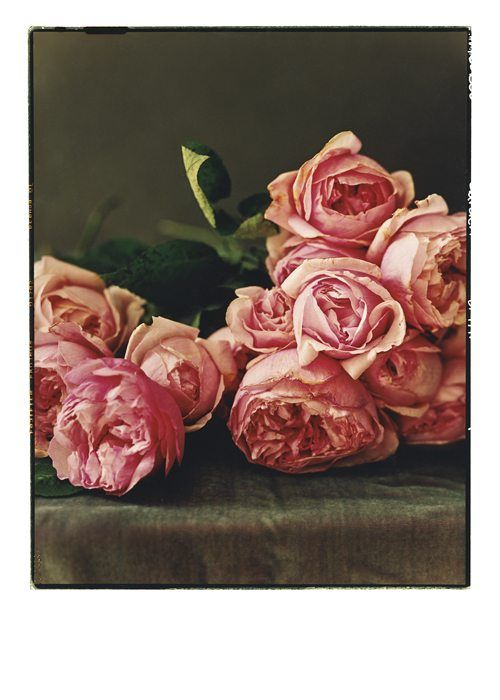 Roses in Frame https://www.palmpressinc.com/product/3603/