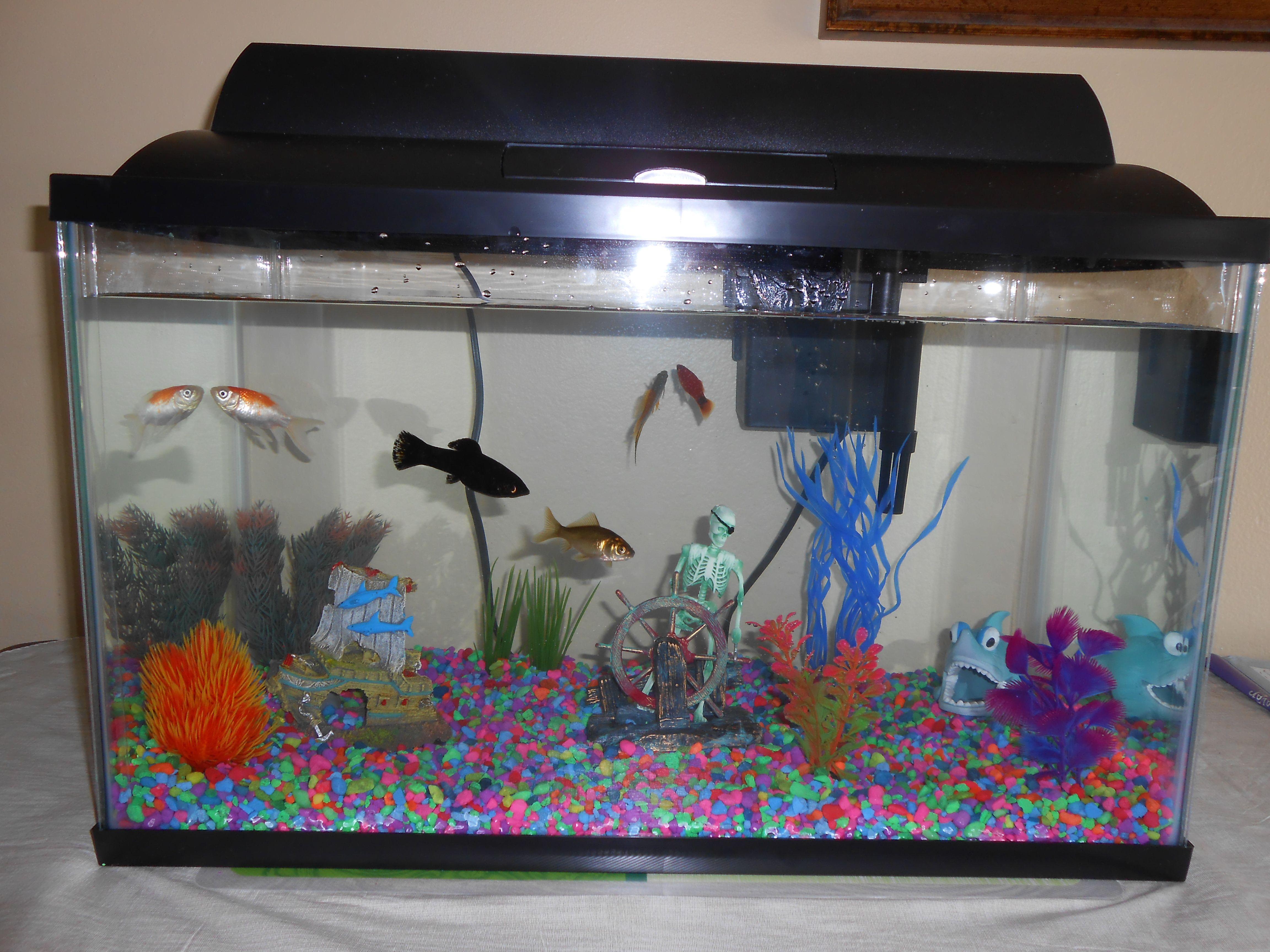 10 Gallon Fish Tank . Tanks Admire Ideas