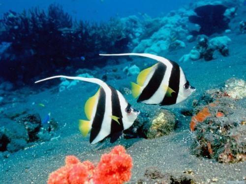 Fonds D Ecran Gratuit Poissons Colores 11451 Creatures Des Oceans Poissons D Eau Salee Poissons Marins