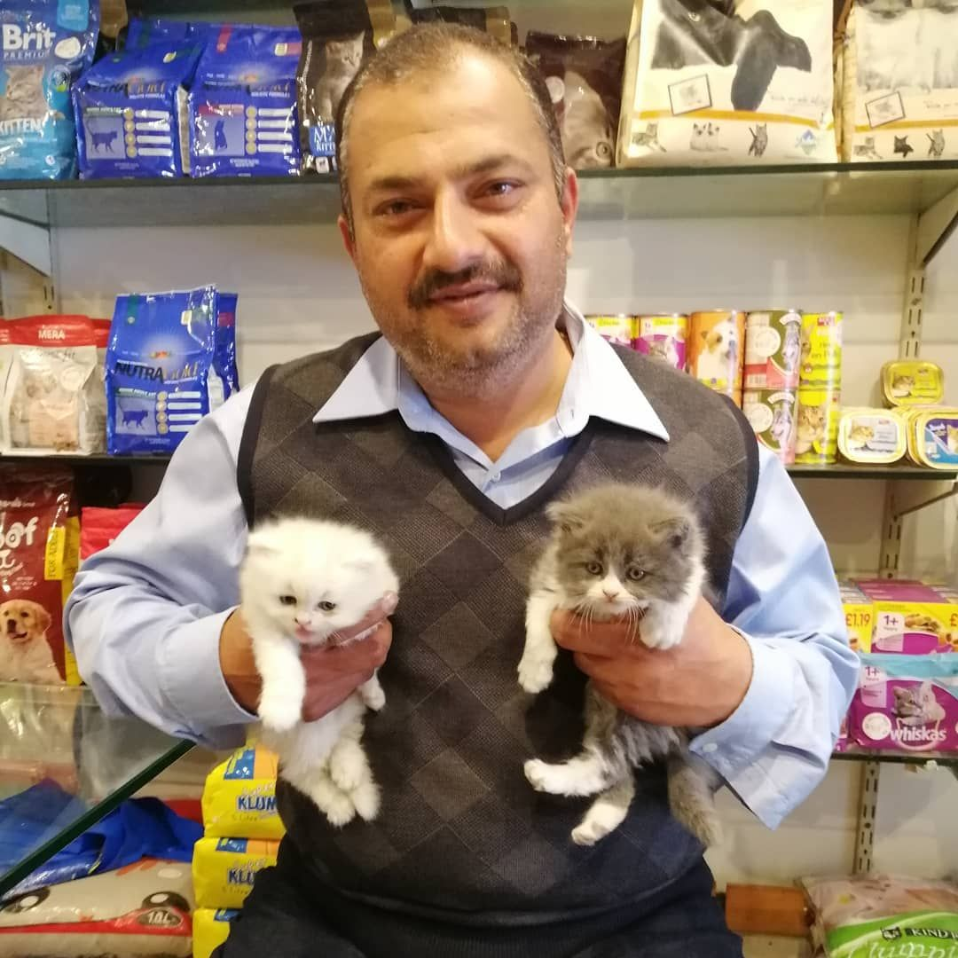 Persian Cats Pair Going To New Home We Are Very Happy That The Kittens Found A Loving Home All Persian Cat Accessories Available At Allaboutpets P In 2020