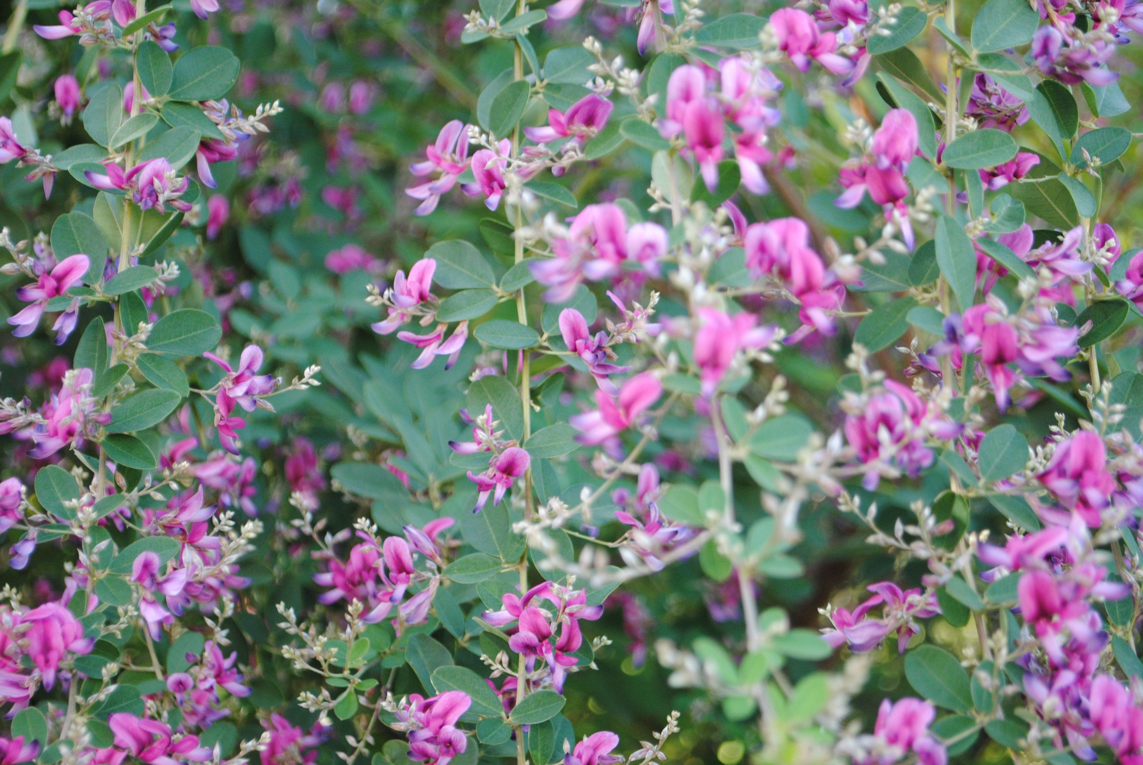 Excepcional Envolturas De Uñas Florales Inspiración - Ideas Para ...