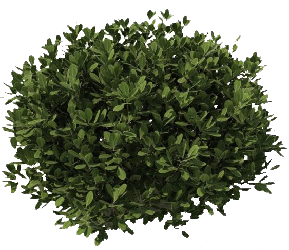 Bushes png image photoshop garden pinterest for Outdoor bushes and plants
