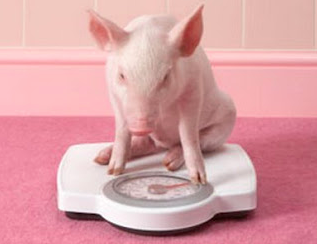 Balancing Diet And Exercise Pal Pig Advocates League Pig Diet Pig Cute Pigs