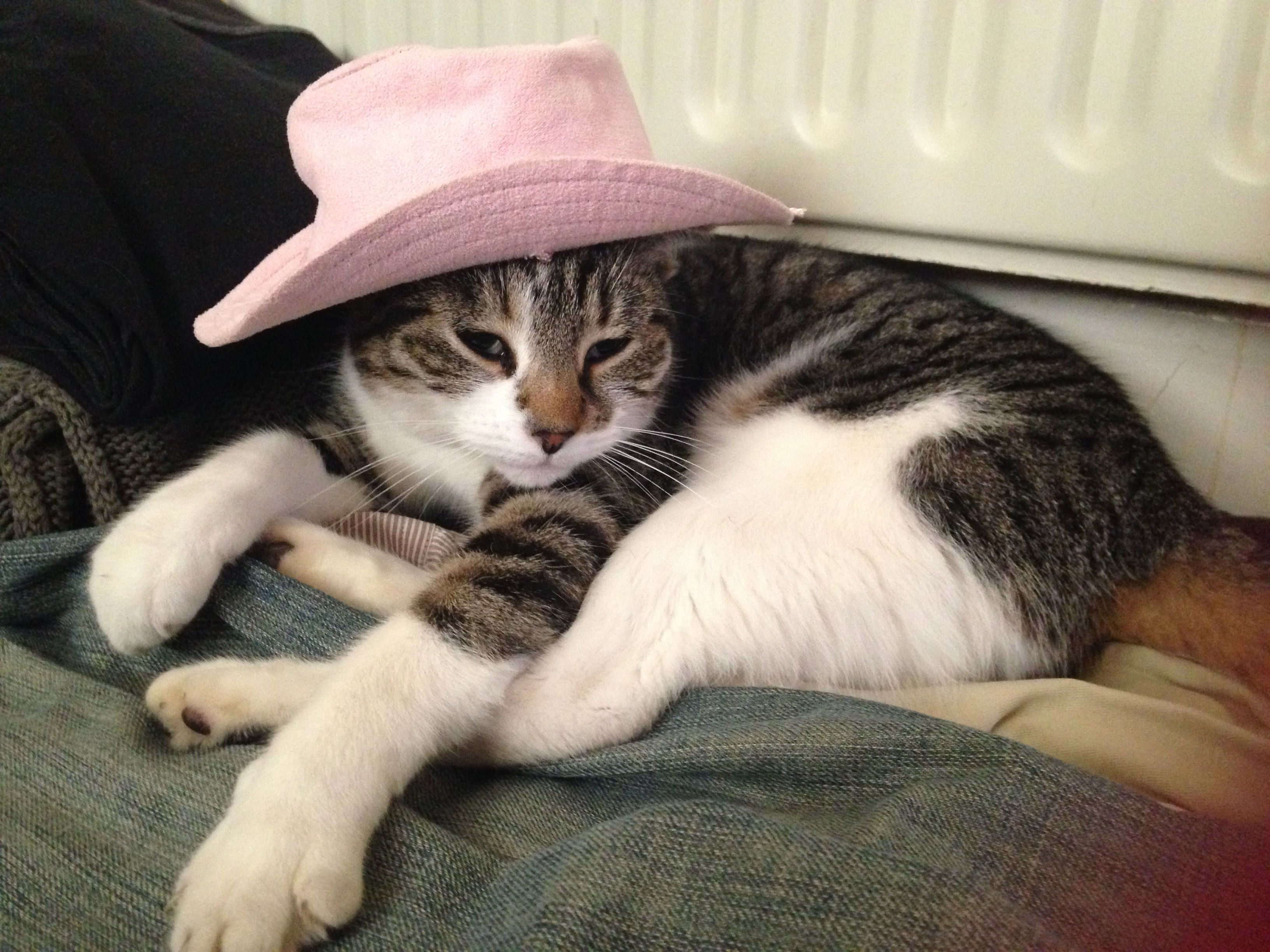 Cowgirl cat Phoebe   Cowgirl, Cats, Pouch