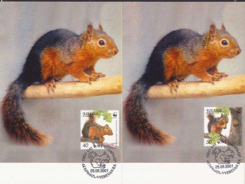 Stamps Armenia 2001 Wwf Squirrel 4 Maxicard S Maximum R18308 Armenia