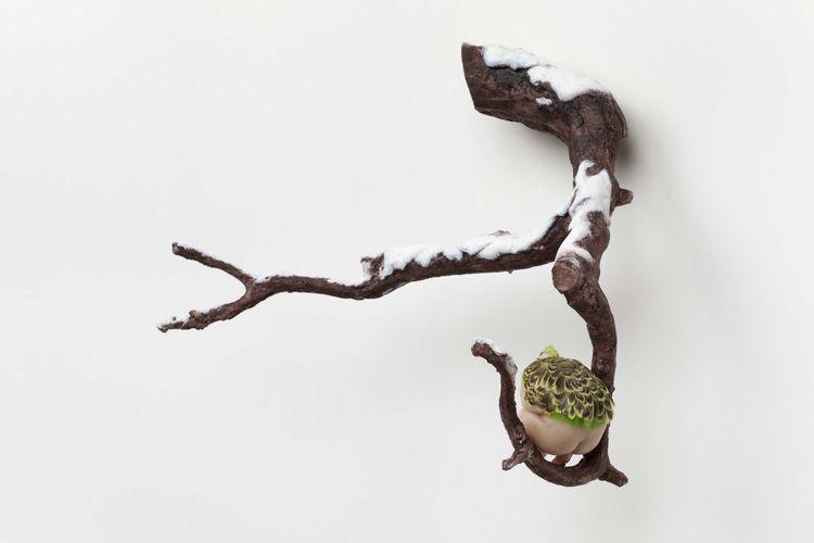 Mu Boyan (b1976, Jinan, Shandong Province, China) | Artiste