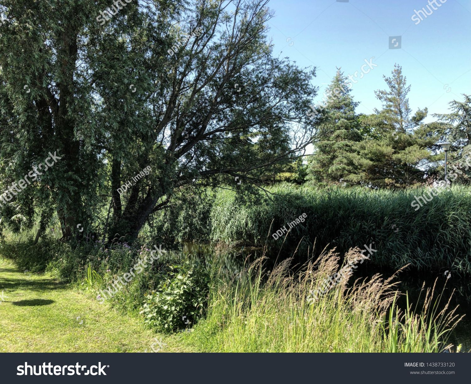 Outdoor Green Park Forest Next To River Rural Landscape Path With Trees And Grass And Modern Benche Sponsored Affiliate Fo Park Forest Green Park Outdoor