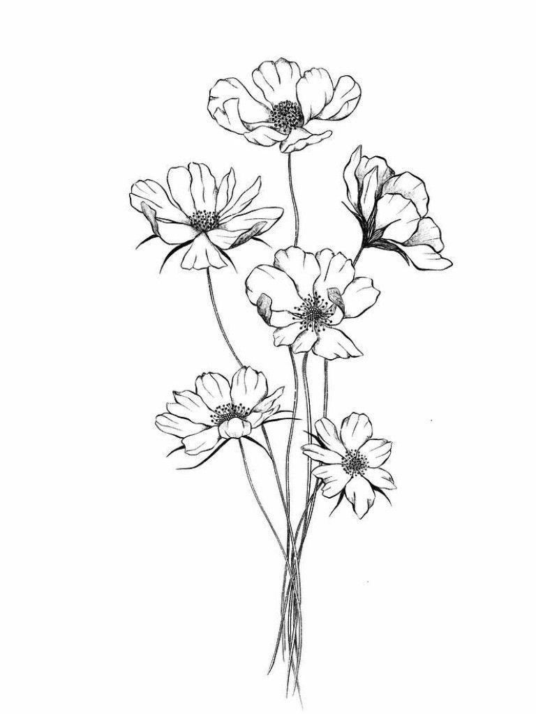 Cosmos Flower Line Drawings Flower Sketches Flower Drawing