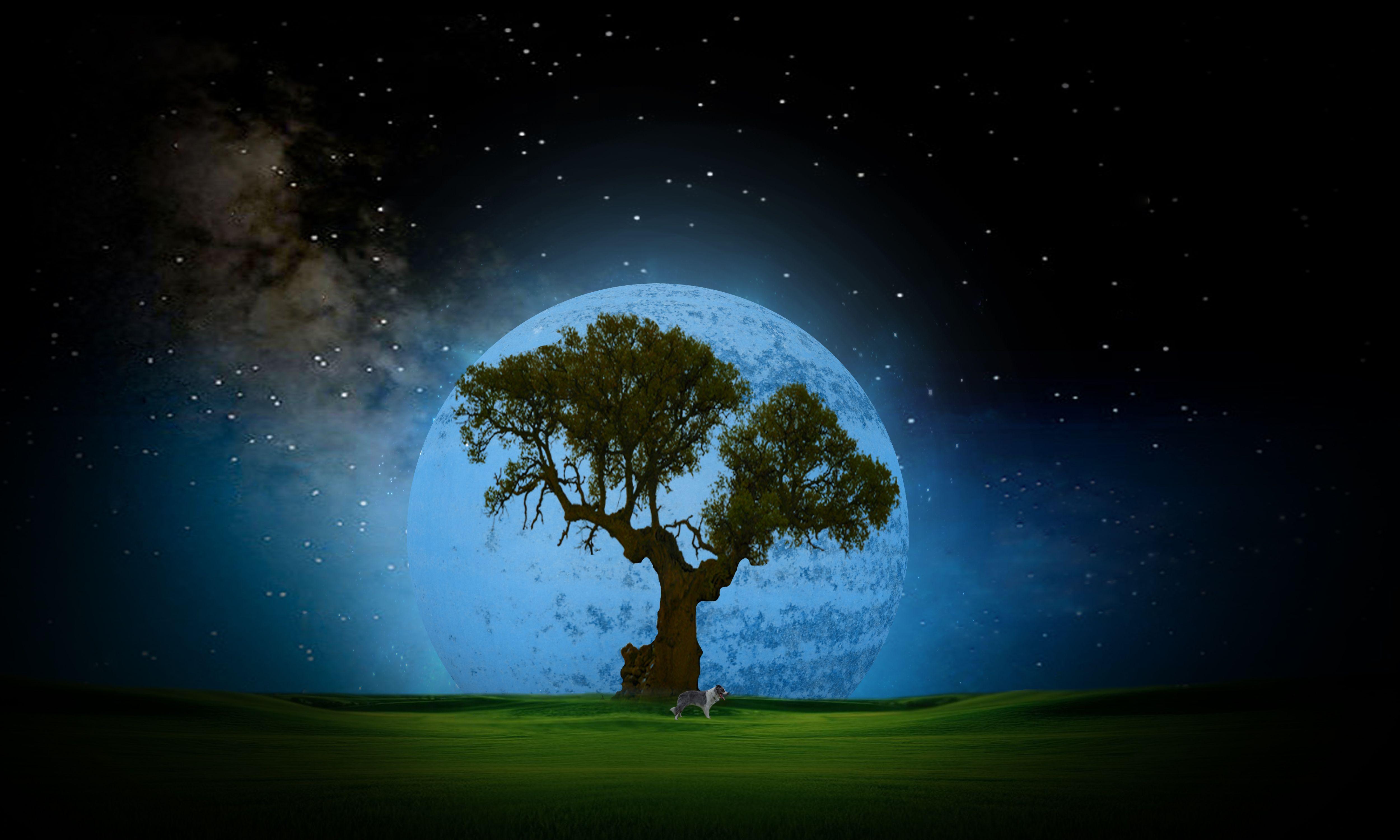 Tree Night Wallpaper Full HD #Xp5