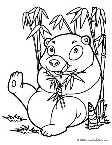 funny panda coloring page more asian animals coloring sheets on