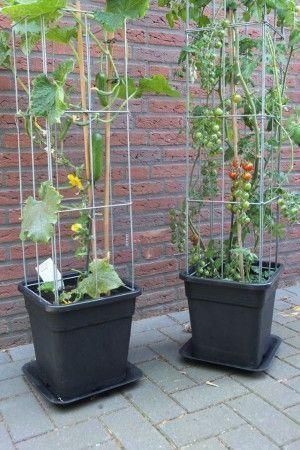 Welche Pflanzen suchen Unterstützung? - #Pflants #search # Support #Welc ... #smallgardenideas