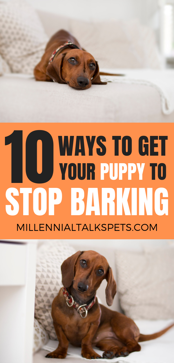 How To Stop Your Dog From Barking Your dog, Tired puppy