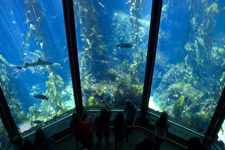 Enjoy The Underwater View At Best Aquariums In U S Http