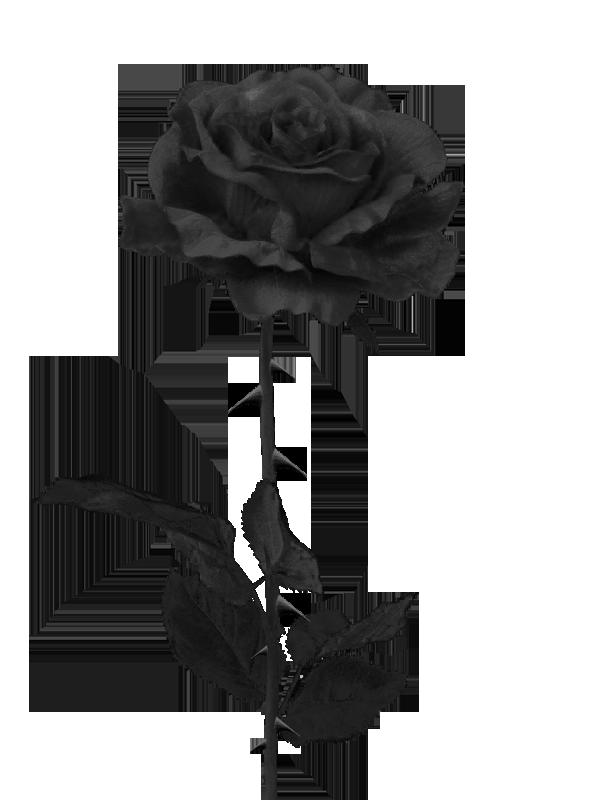 black rose Szukaj w Google Pomysły na tatuaż