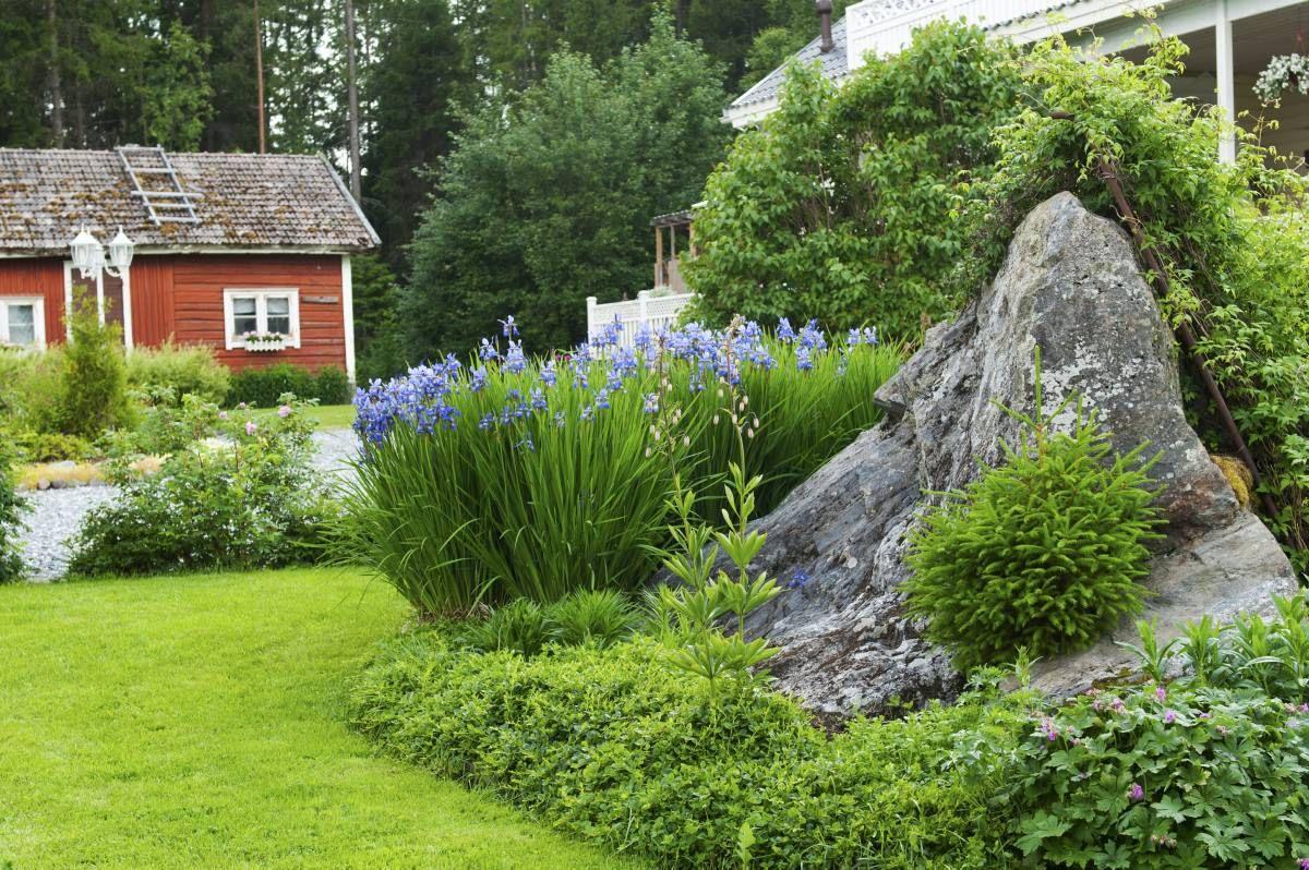 Pieni kuusentaimi on löytänyt tiensä kivenlohkareen rakoon. Kiveä ympäröi runsas istutusalue, jossa kukkivat nyt siperiankurjenmiekat, varjoliljat ja kärhöt.