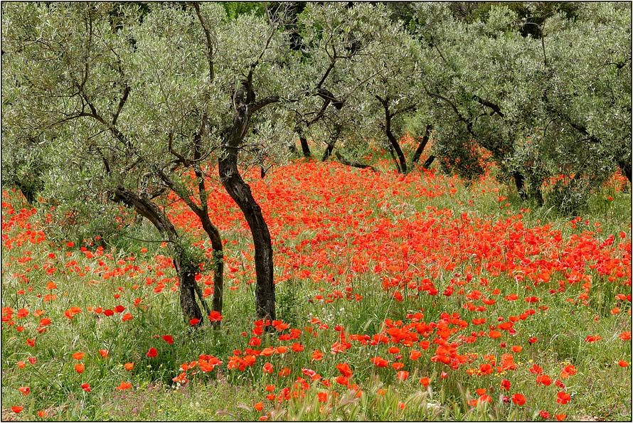 Garten Provence olivenhain provence rainer gütgemann garten