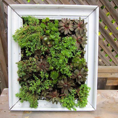 10 vackra vertikala trädgårdar för dig med begränsad yta - Hus & Hem