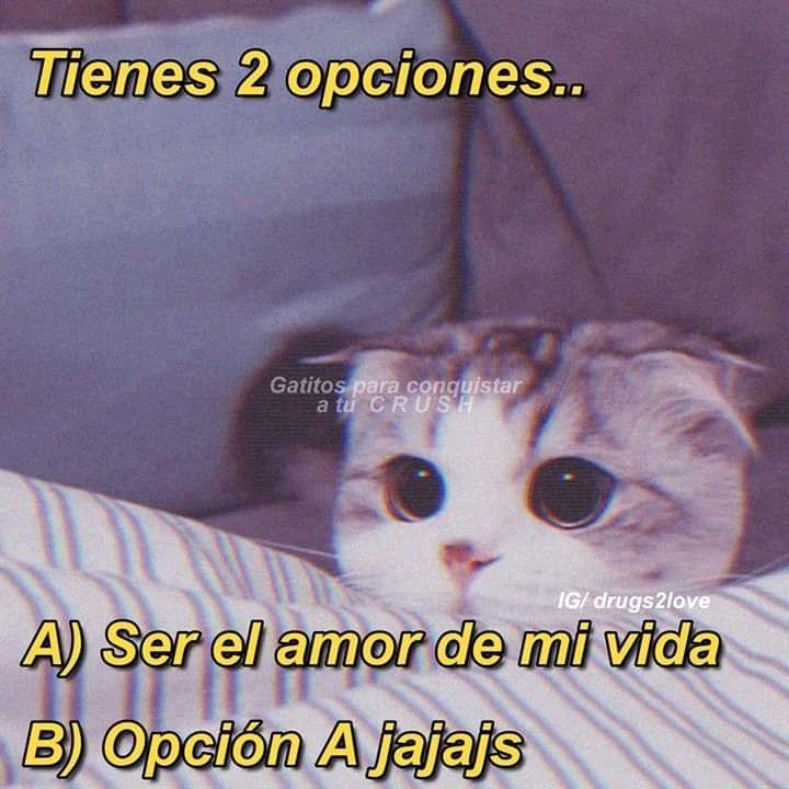 Pin De Raven Joy Em Mss Memes Apaixonados Memes De Amor Memes Bonitos