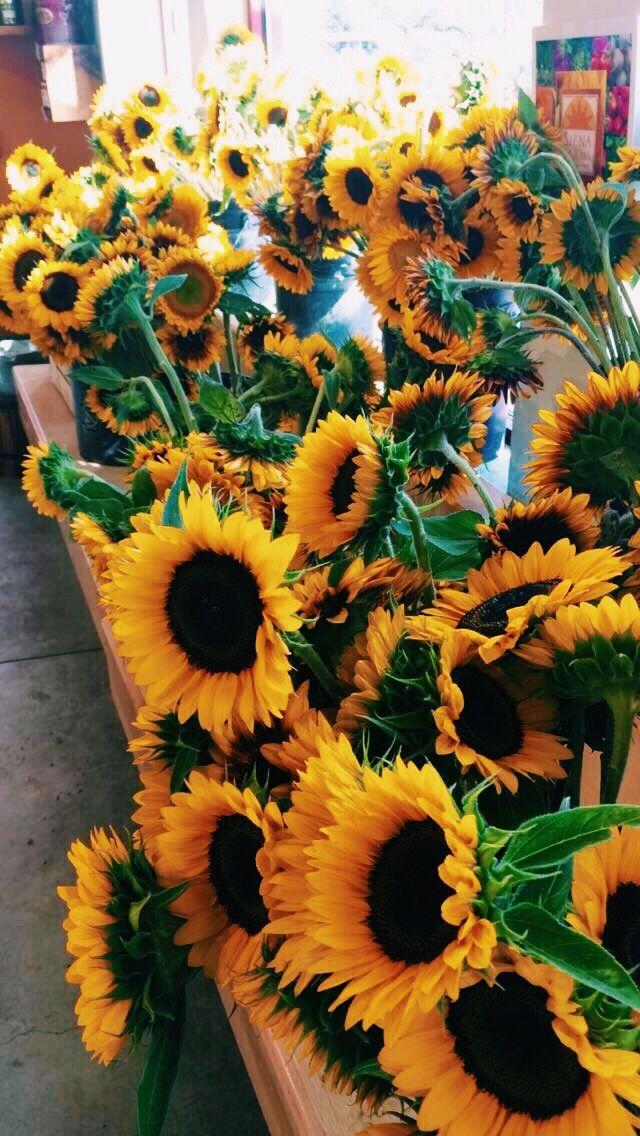Ohh My I Love Sunflowers