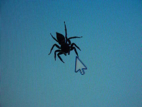 Download:Tem uma Aranha no Meu Monitor (Wallpaper) - http://hypedownloads.com.br/tem-uma-aranha-no-meu-monitor-wallpaper.html