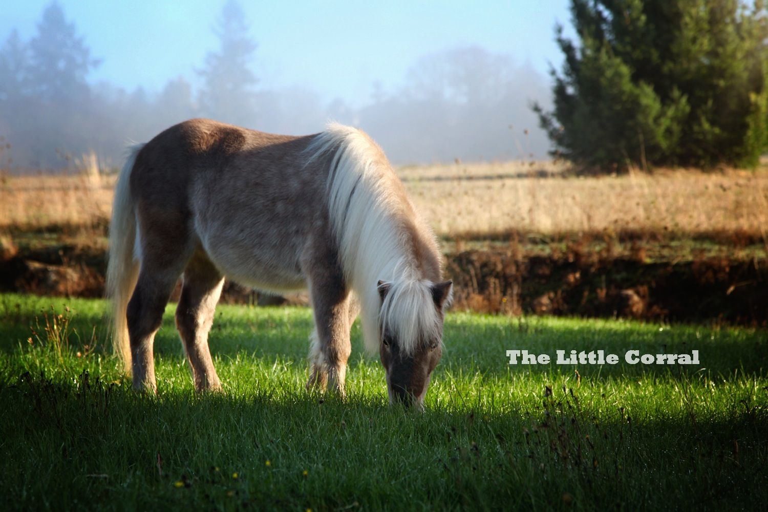 Clover A Shetland Pony Who Makes Sweet Dreams For Kids At The