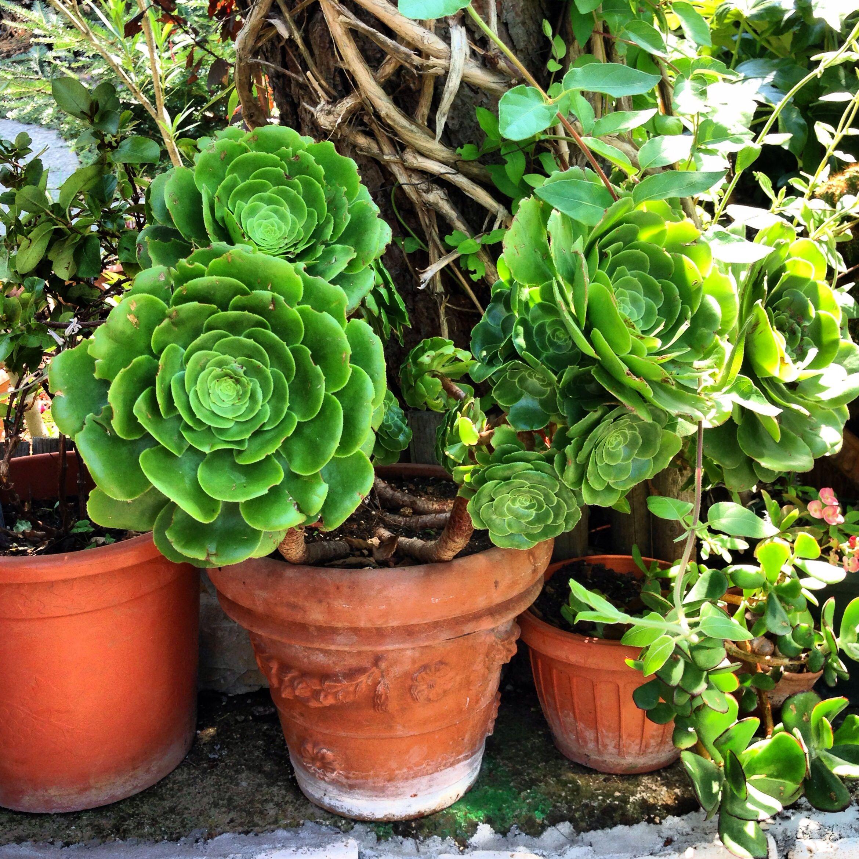 Beautiful Potted Flowers Of Carpinone Carpinone Italy My