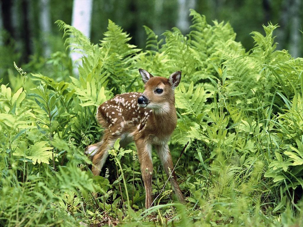 Fonds D Ecran Gratuits Sur Pc Astuces Habitat Des Animaux Animaux Beaux Animaux Mignons