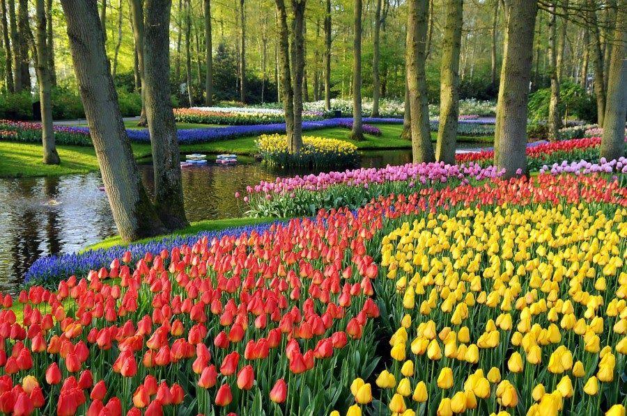 Pemandangan Indah Warna Ungu Http Bit Ly 2s0emk5 Pemandangan Pemandangan Indah Pemandangan Alam Taman Indah Bunga Tulip Pemandangan