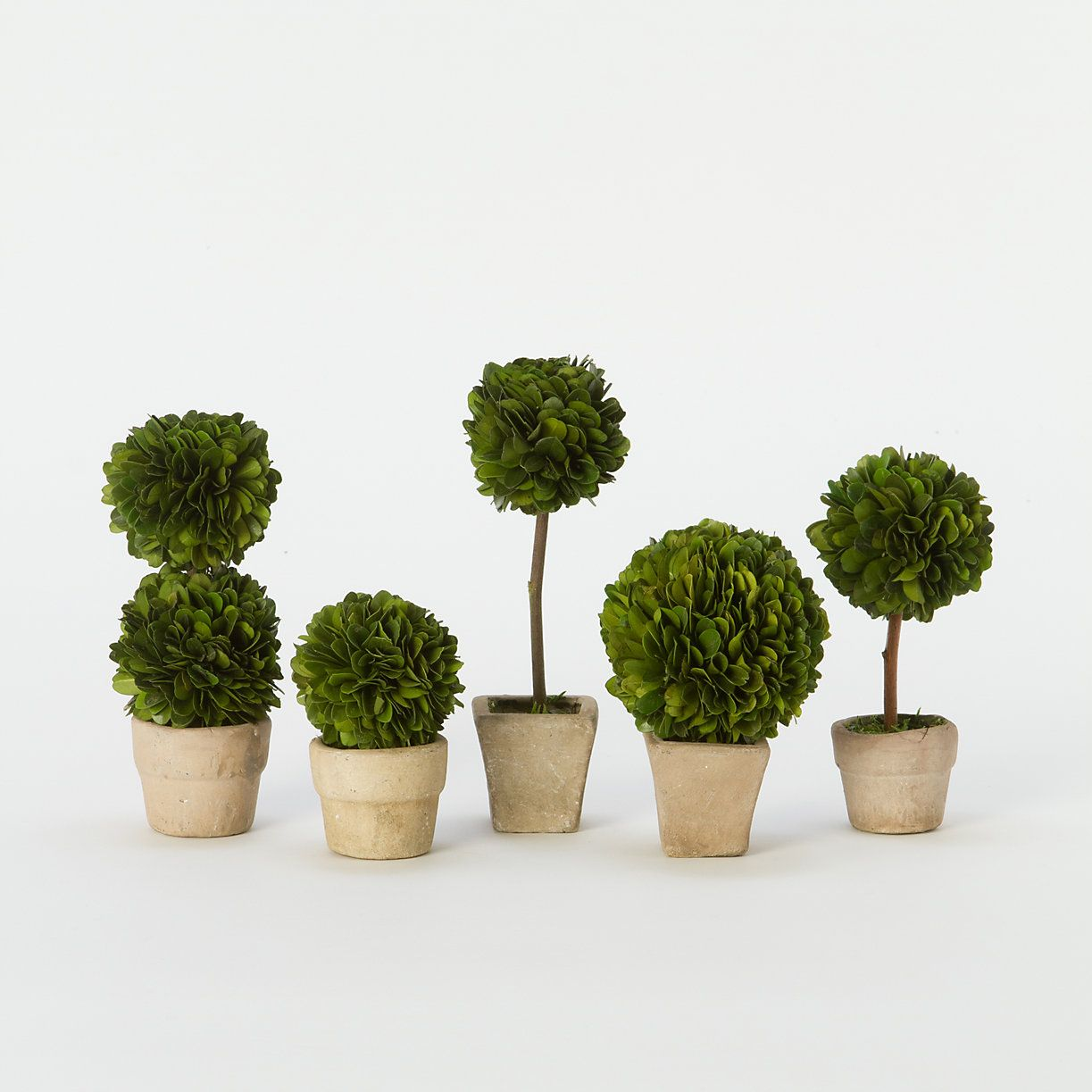 Preserved Boxwood Mini Topiary Set Preserved Boxwood Topiary Preserved Boxwood Topiary