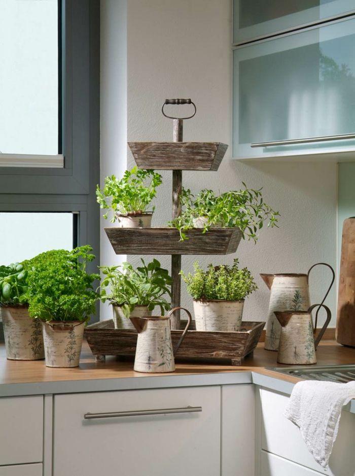 Kräuter in der Küche ziehen Kübelpflanzen Fensterbank