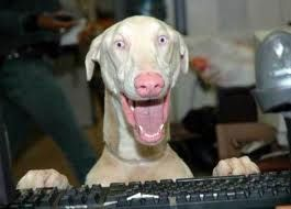 Este Es Un Flaco Simpatico Fotos Divertidas De Perros Humor Divertido Sobre Animales Imagenes Divertidas De Animales