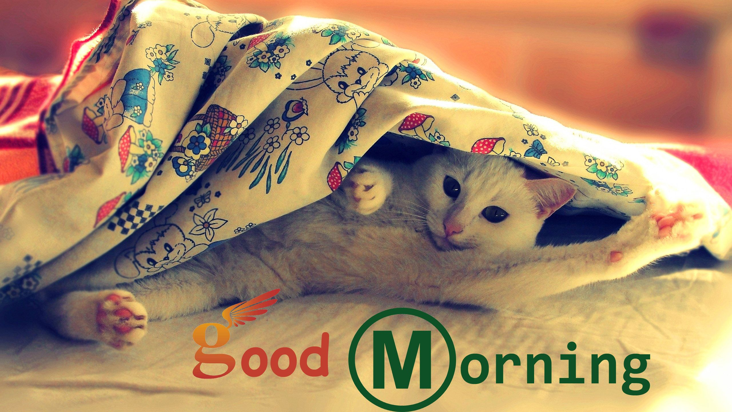 good morning sweet hd pics 1080p | good morning | pinterest