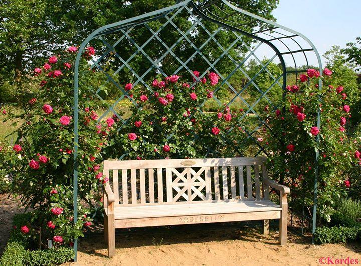 die grosse rosen laube 39 viktoria 39 von classic garden elements mit drei kletterrosen 39 laguna 39 im. Black Bedroom Furniture Sets. Home Design Ideas